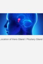 hero_gland_pituitary_series_kundalini_yoga